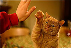 Katze High Five